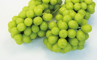 B174 中村柿ぶどう園 シャインマスカット2kg