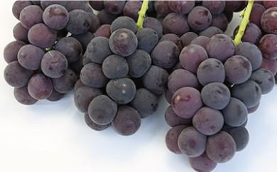 B121 中村柿ぶどう園 種なし巨峰2kg