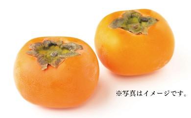 B262 春光園 富有柿 3kg箱