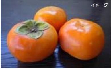 B273 山口農園 特上富有柿 3kg箱