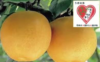 B233 佐藤ファーム 新高梨5kg