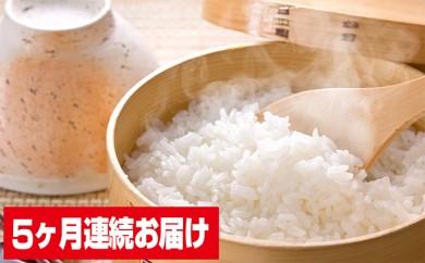 [№5905-0027]揖斐郡産 味のいび米 はつしも10kg×3 5ヶ月連続