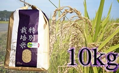 B-154 佐賀県産 特別栽培米 ヒノヒカリ10kg