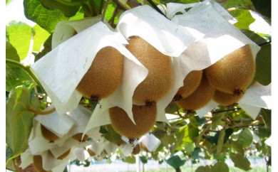 キウイフルーツ 4㎏(山下果樹園)