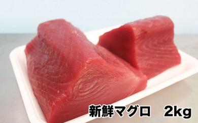 伊平屋島の若き漁師からお届け 新鮮マグロ 約2kg