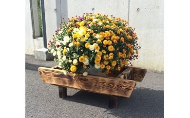 【20003】富加町産木曽杉BOX(小)