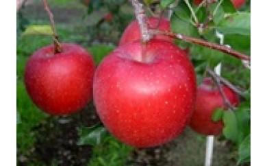 [P06]「サンふじ」太陽をいっぱい浴びて育ったりんごの王様