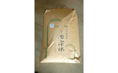 29C-018 「田楽米」コシヒカリ30kg玄米【30,000pt】