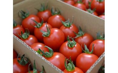 No.010 つぶよりミニトマト 3kg箱入