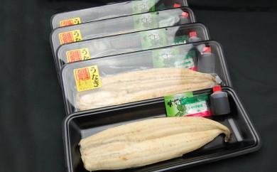 164 鹿児島県大隅産ウナギの白焼き5匹セット