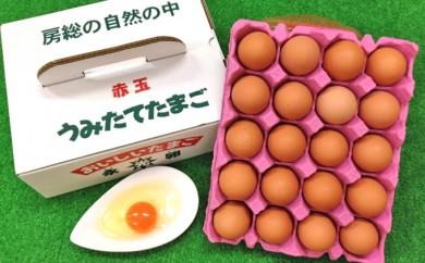 D-1 おいしいたまご永光卵