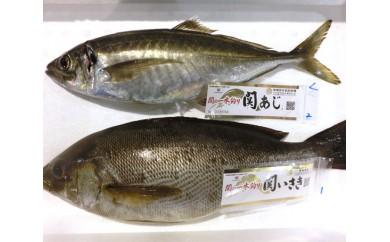 No.273 関あじ・関いさき(鮮魚)セット(各1尾)【30pt】