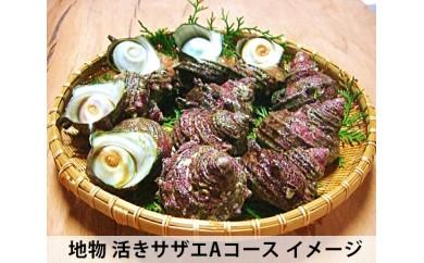 No.002 地物 活きサザエAコース 1.2kg(10~15ヶ)