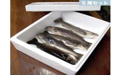 B-11 滝沢市特産品岩魚30尾