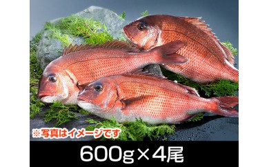 No.065 南伊勢ブランド「お炭付き鯛」塩焼きサイズ(600g前後×4尾)