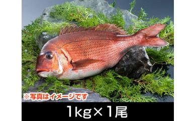 No.062 南伊勢ブランド「お炭付き鯛」(1kg前後×1尾)