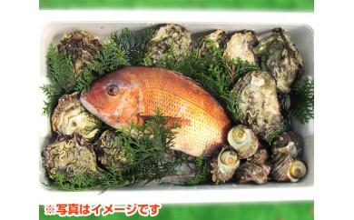 No.056 南伊勢町産魚介類(タイ・サザエ・カキ)セット