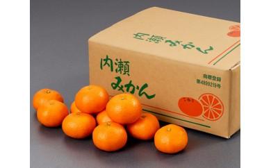 No.022 内瀬みかん 5kg