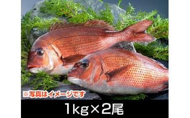 No.064 南伊勢ブランド「お炭付き鯛」(1kg前後×2尾)