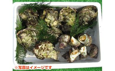 No.049 南伊勢町産貝類(サザエ・カキ)セット