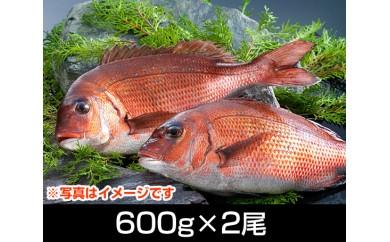 No.063 南伊勢ブランド「お炭付き鯛」塩焼きサイズ(600g前後×2尾)