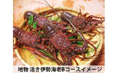 No.033 地物 活き伊勢海老Bコース 3~4尾(約800~850g)