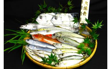 W002-1 高級魚入り!漁師直送今朝どれ鮮魚詰め合わせセット!