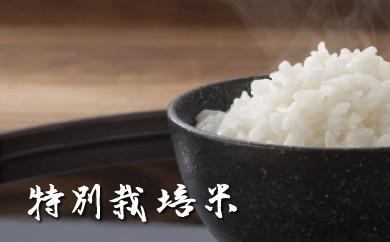 D-51 佐賀県産早場米「特別栽培米 七夕こしひかり」 15kg【貴重な早場米!!】