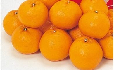 A29371岸田果樹園のはるみ4kg〃甘く弾ける果肉が魅了するプレミアム蜜柑・季