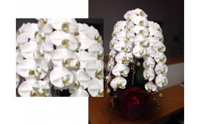 J001:季節の花の贈り物② 胡蝶蘭3本立ち又は5本立ち