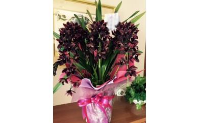 J002:季節の花の贈り物③ シンピジューム