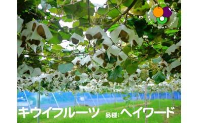 キウイフルーツ 4kg箱(マキノキ園)