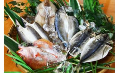 低温熟成製法により、刺身を超えた旨味!佐伯で創業100年、魚の目利きが選ぶ厳選干物詰め合わせ
