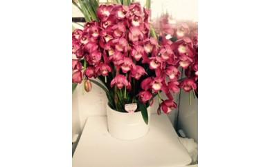 G001:季節の花の贈り物① シンピジューム