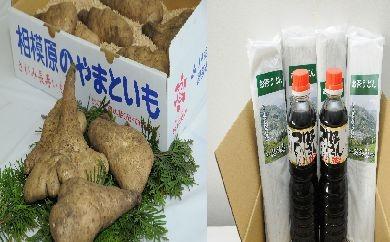 【地元JAが発送!!】相模原産の大和芋2kg+お茶うどん10束+万能だし2本詰め合わせ 【申込期限12月31日まで】