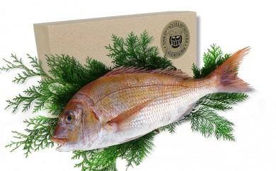 [№5803-0079]【特選品】瀬戸内海産の真鯛の味噌漬け6切れ