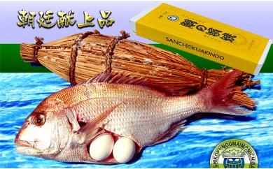 [№5803-0083]瀬戸内海産 キングサイズの天然鯛の浜焼き10人前以上~