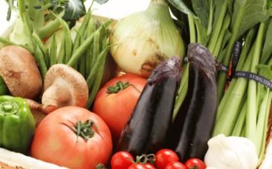 [№5910-0006]旬の新鮮野菜セット たっぷり15種以上