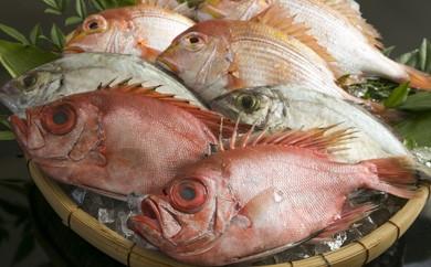 CS01 日本唯一「以西底びき網漁」の鮮魚詰合せ【45pt】
