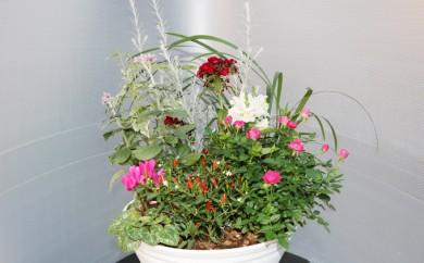 [№5702-0037]季節の花苗寄せ植え 10号鉢
