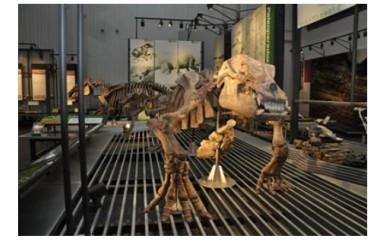 [A-54] 【足寄町】足寄動物化石博物館