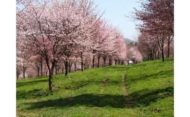 桜オーナーの権利