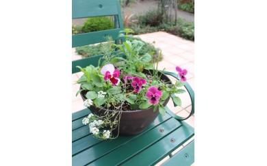 北川村「モネの庭」から季節の寄せ鉢【北川村モネの庭マルモッタン】