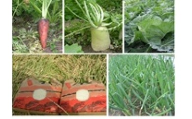 M012:淡路島産のお米3kg×2、季節の野菜セット(5種類程度)