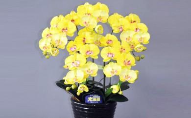 [№5809-1059]光触媒アートフラワー(造花) コチョウラン黄M5本立