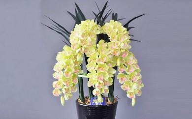 [№5809-1060]光触媒アートフラワー(造花)シンピジウム グリーンM5本立