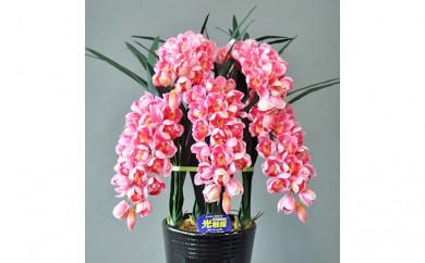 [№5809-1063]光触媒アートフラワー(造花)シンピジウム ピンクM5本立