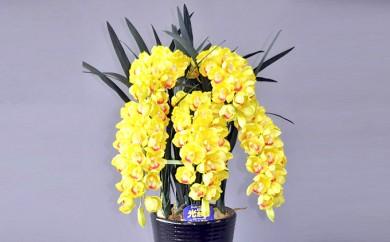 [№5809-1061]光触媒アートフラワー(造花)シンピジウム黄M5本立