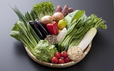 B3-01 武雄市人気野菜と九州厳選野菜の詰め合わせデラックス(14品~16品)