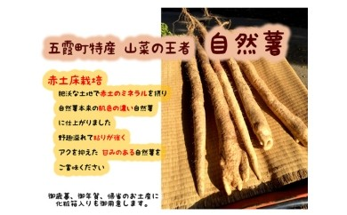 No.041 山菜の王者「自然薯」五霞町特産品